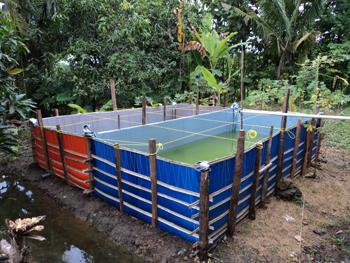 Sukses Budidaya Ikan Nila Di Kolam Terpal Riwandhy